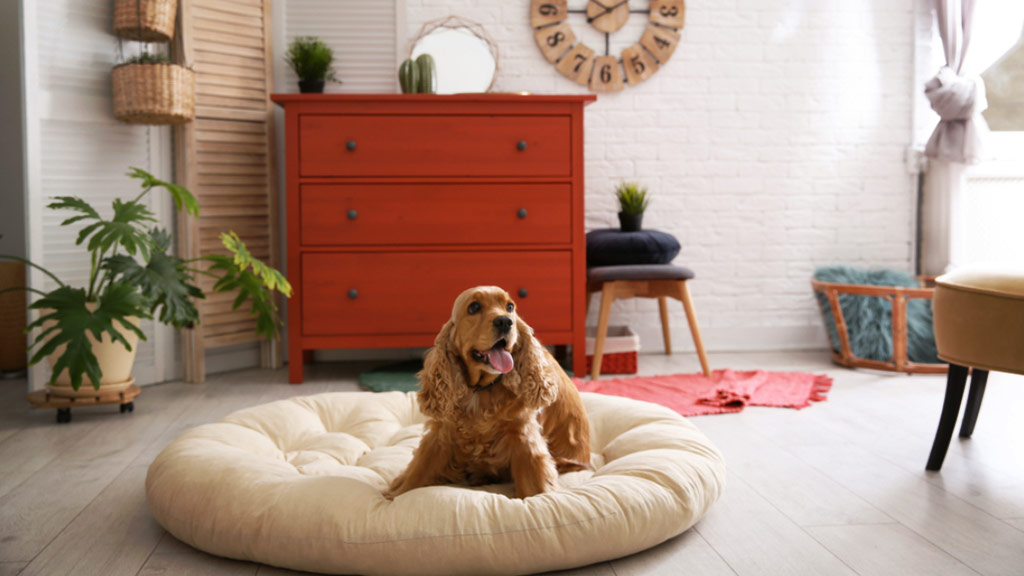 Simple Ways to Make Home Pet-Friendly